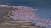 Aerial view of flamingos on Lake Bogoria, Kenya