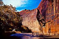 Wild horses running, Canyon de Chelly National Monument, near Chinle, Arizona USA