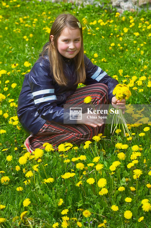 Girl picking yellow flowers, Lithuania