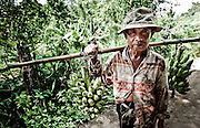 A local villager walked out of the bush carrying bananas for breakfast in the area around Pai, North of Chiang Mai in Thailand. He stood still, stern and silent for a minute and then continued on without a word.
