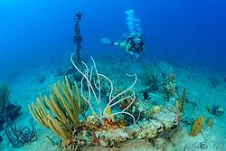 Schiffswrack Rhone und Taucher, Shipwreck Rhone and Scuba diver, Virgin Gorda Island, Britische Jungferninsel, Karibik, Karibisches Meer, British Virgin Islands, BVI, Caribbean Sea