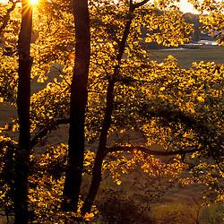 Yarmouth, ME. The sun shines through oak trees on the edge of a salt marsh near the Royal River.   TPL project.