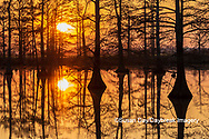 63895-17414 Cypress trees at sunset in fall Horseshoe Lake State Fish & Wildlife Area Alexander Co. IL