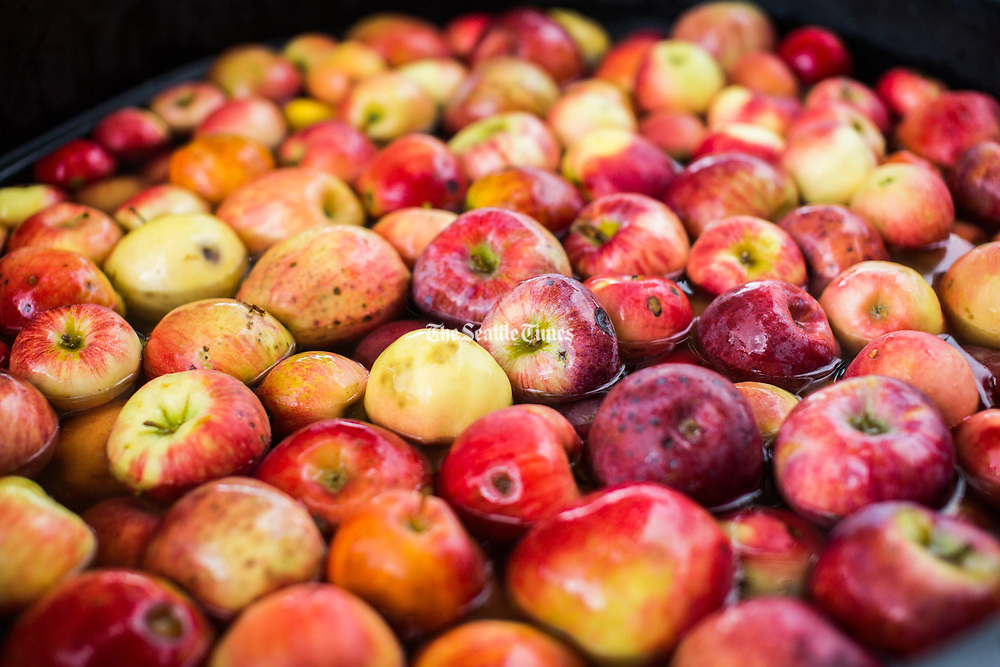 Apples soak waiting to be turned to cider. (Rebekah Welch)