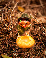 Backyard Nisse with a new autumn mushroom. Composite of 24 focus stacked images taken with a Nikon D810a camera and 60mm f/2.8 macro lens (ISO 200, 60 mm, f/3, 1/640 sec). Raw images processed with Capture One Pro, and the image stack processed with Helicon Focus.