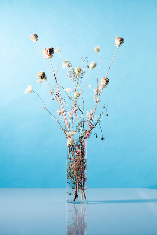 still life with taken from nature dried up wildflower twig with seed heads