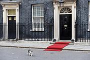 Staatsbezoek van Koning Willem Alexander en Koningin Máxima aan het Verenigd Koninkrijk<br /> <br /> Statevisit of King Willem Alexander and Queen Maxima to the United Kingdom<br /> <br /> Op de foto / On the photo: Larry the cat on Downing Street 10