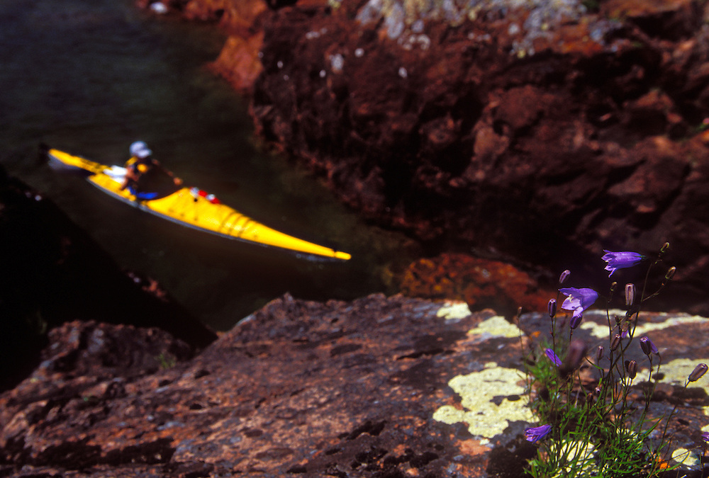 Wild flowers cling to the rugged shoreline of the Keweenaw Peninsula as a sea kayaker paddles Lake Superior near Lac LaBelle, Mich.