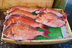 fresh red seabream, Pagrus major, for sale at wholesale shop, Tsukiji Fish Market or Tokyo Metropolitan Central Wholesale Market, the world's largest fish market, hadling over 2,500 tons and over 400 different kind of fresh sea food per day