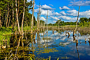 Zarastajce jezioro w okolicach Wgorzewa