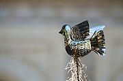 A metalwork dove atop the nativity scene in the Zocalo, Oaxaca, Mexico.