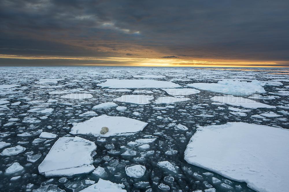 This picture give me assosiations to global warming and the challenges the Polarbears are facing with icemelting right now and in the future. Picture captured at Spitzbergen at 82° 37N in the Arctic Ocean   Dette bildet får meg til å tenke på global oppvarmimg og utfordringene som Isbjørnene har med smelting av is nå og i fremtiden. Bildet er tatt i Polhavet nord om Svalbard.