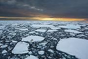 This picture give me assosiations to global warming and the challenges the Polarbears are facing with icemelting right now and in the future. Picture captured at Spitzbergen at 82° 37N in the Arctic Ocean | Dette bildet får meg til å tenke på global oppvarmimg og utfordringene som Isbjørnene har med smelting av is nå og i fremtiden. Bildet er tatt i Polhavet nord om Svalbard.
