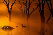 Australia - Wildlife