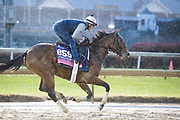November 1-3, 2018: Breeders' Cup Horse Racing World Championships. Newspaperofrecord (IRE)