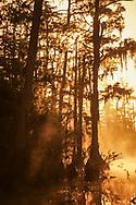 Sunrise, fog, cypress swamp, Okefenokee National Wildlife Refuge, © David A. Ponton