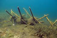 Fish Attractors<br /> <br /> ENGBRETSON UNDERWATER PHOTO