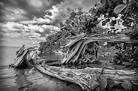 indian river save our river,Everglades Gallery Big Cypress Gallery, Johnbobcarlos, Johnbob, Everglades , Gladesman, Big Cypress, Fl Florida photography