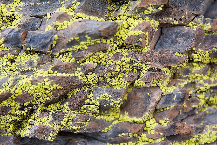 Yellow lichen grows on rock in the Sierra de San Francisco, Baja California Sur, Mexico on January 27, 2009.