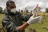 Tollwut-Impfteam des EWCPs bei der Arbeit in einem Dorf nahe von Dinsho am Rand des Bale Mountains Nationalparks