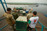 Three wild orangutans which were rescued by the Borneo Orangutan Survival Foundation (BOS) from burned out areas are being translocated to Sebangau National Park by boat.  They have been brought from the BOS holding center where they have been for several days, and are now being transfered to a boat for travel to the park.<br /><br />Kereng Village, Sebangau District<br /><br />Central Kalimantan Province, Indonesia<br />Island of Borneo