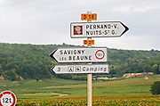 Vineyard. Pernand Vergelesses, Nuits Saint Georges, Savigny les Beaune, Burgundy, France Burgundy, France