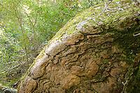 Moss grows in rock crevasses on Pine Ridge Trail, Big Sur, California.