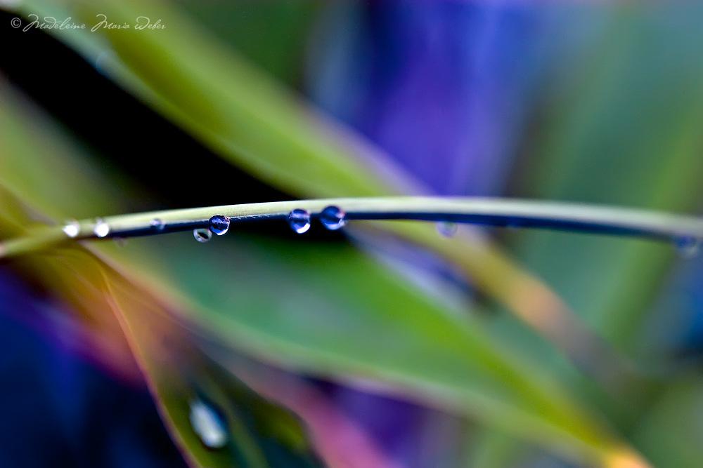 Colourful rain drops / dr001