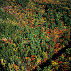White Mountain N.F., NH. Pemigewasset Wilderness Area from near the site of the old Camp 22 logging camp.  North Fork of the East Branch of the Pemigewasset River. Early fall.