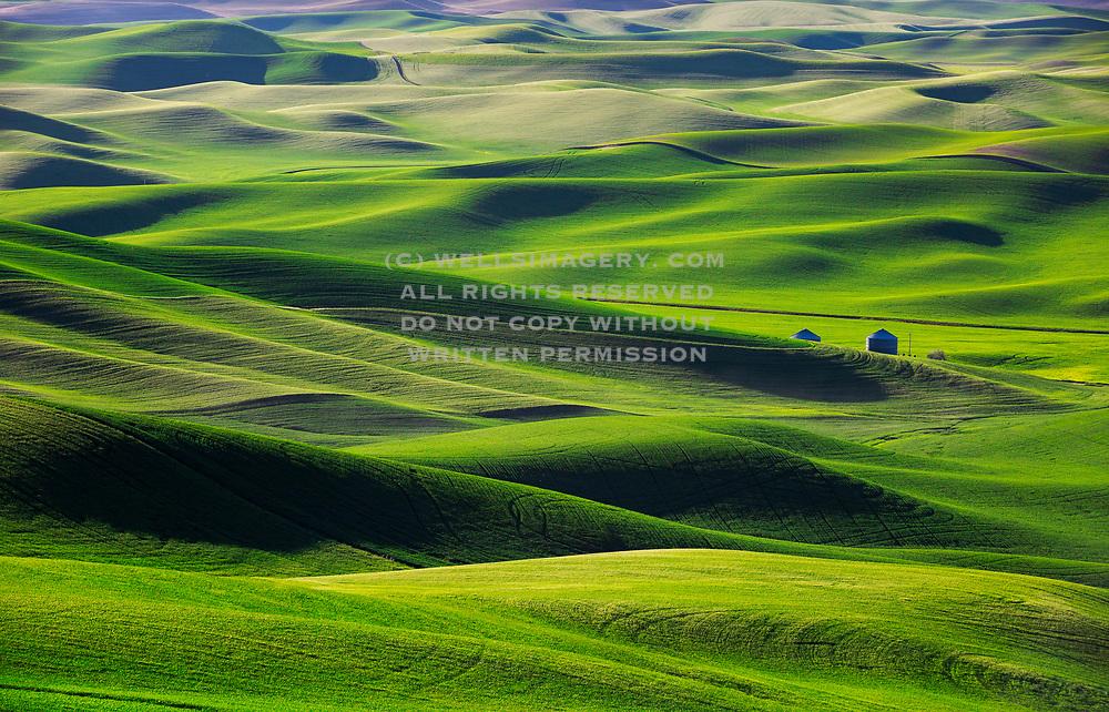 Image of wheatfields near Steptoe, Palouse, eastern Washington, Pacific Northwest by Randy Wells