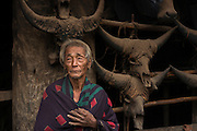 Konyak Naga house & Mithun skulls<br /> Konyak Naga headhunting Tribe<br /> Mon district<br /> Nagaland,  ne India