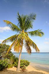 Mango Bay mit Palmen und Sandstrand, Mango bay with Palms and sandy beach, Insel Virgin Gorda, Britische Jungferninsel, Karibik, Karibisches Meer, Virgin Gorda Island, British Virgin Islands, BVI, Caribbean Sea