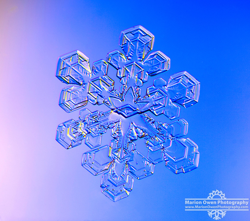 Split crystal of a real snowflake photographed in Anchorage, Alaska