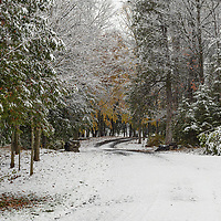 An early snowstorm traces the branches on the mine road.