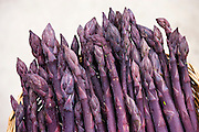 Purple asparagus spears in a basket in the Vale of Evesham, traditional home of asparagus, Worcestershire