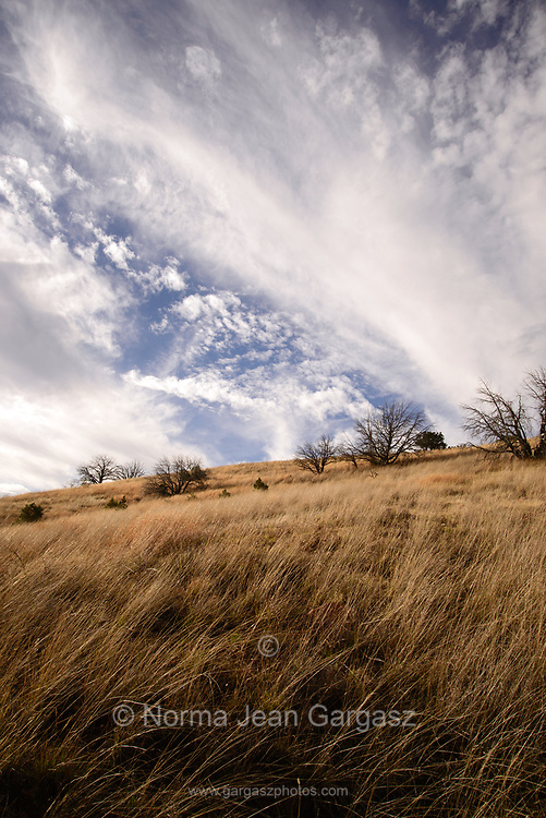 Grasslands in March as seen from the Arizona Trail along Gardner Canyon Road, north of Sonoita, Arizona, USA.
