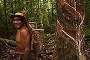 Balata Bleeder - Harry Samuels<br /> MODEL RELEASE GYA#4<br /> From the Balata or Bullet Wood Tree that produces a natural latex<br /> Katoka<br /> Rupununi<br /> GUYANA<br /> South America