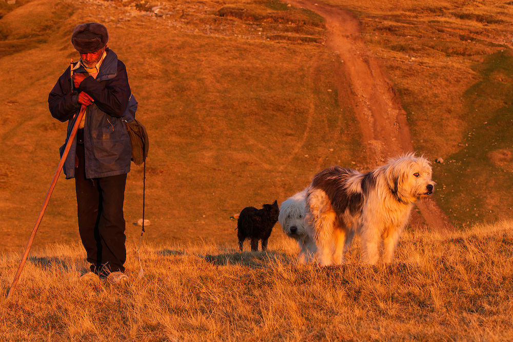 Shepherd and Romanian shepherd dogs (breed: Mioritic) in the Munti Tarcu Natura 2000 site. Southern Carpathians, Munții Ṭarcu, Caraș-Severin, Romania.