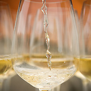 Glasses of white wine during a wine tasting event at the Grover Winery near Bangalore, Karnataka, India.