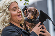 Cyril the Dachshund - A charity Halloween Dog Walk and Fancy Dress Show organised by All Dogs Matter at the Spaniards Inn, Hampstead. London 29 Oct 2017.