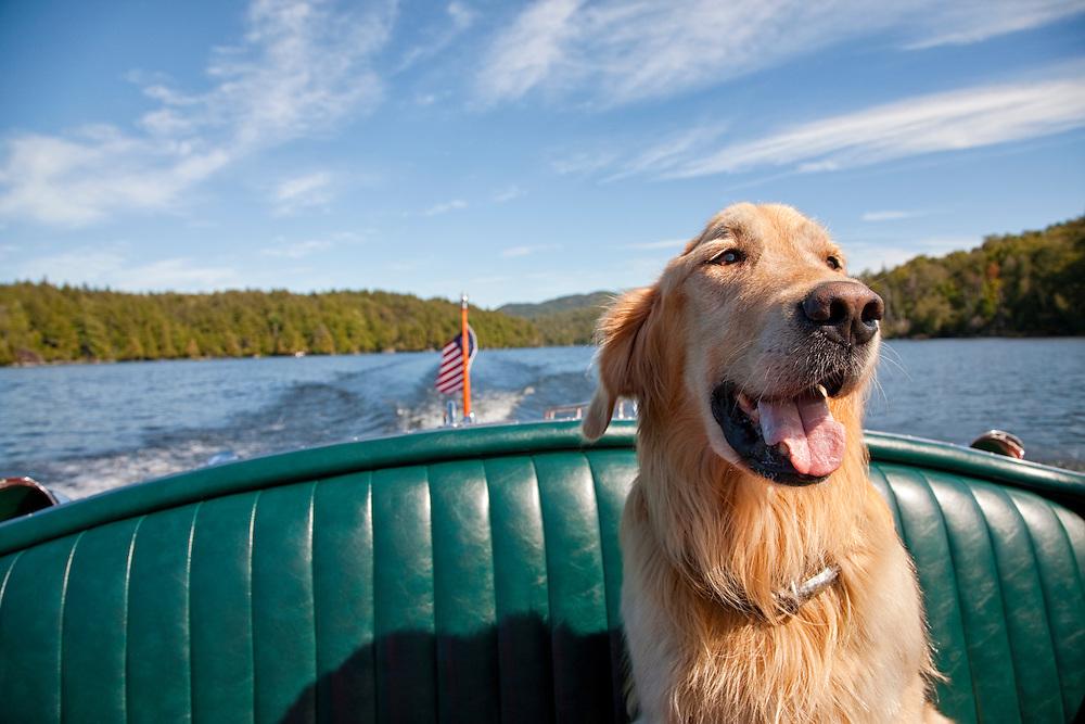 Golden retriever in back seat of a motor boat
