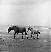 1964-23/07 Connemara Pony and Foal
