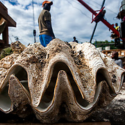 Giant Clam Trade