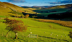 Autumn light in the Scottish Borders near Broughton<br /> <br /> (c) Andrew Wilson | Edinburgh Elite media