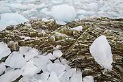 Calved ice fills the forebay of Hansbreen, Hornsund, Svalbard.