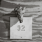 I asked, no one knew why there was a pigs head nailed to the side of building 92.