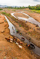 Konso tribe people get drinking water from the Sagan River as cattle drink from it as well, Konso, Ethiopia.