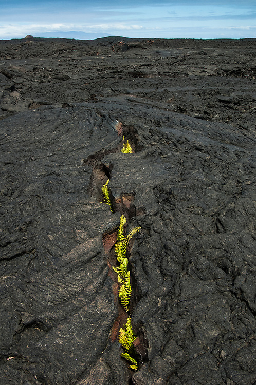 Pahoehoe Lava. The Hawaiian name for 'ropy'. This is smooth lava which often forms amazing patterns. It is formed as a result of magma containing a large amount of gas.<br /> Santiago Island, GALAPAGOS ISLANDS<br /> ECUADOR.  South America