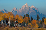 Aspen Sunrise below the Grand Teton in Grand Tetons National Park, Jackson, Wyoming