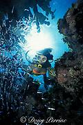 diver investigates cave full of glass minnows,<br /> Berry Islands, Bahamas,<br /> ( Western Atlantic Ocean )  MR 115